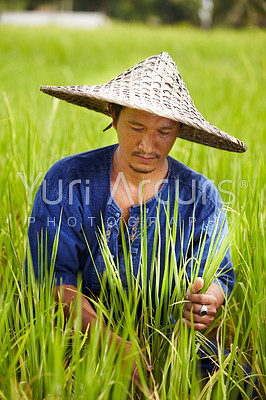 A rice farmer in Thailand harvesting rice wearing a traditional hat